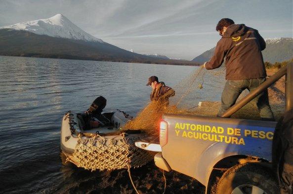 Temporada de salmón Chinook en la región de Aysén